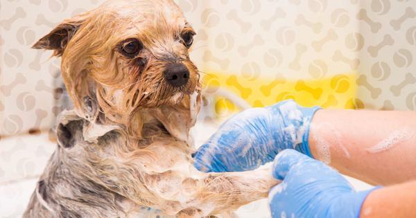 Мыть поражённое животное лучше в перчатках