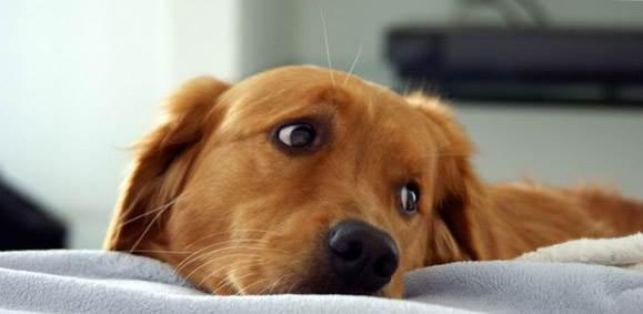 Остеохондроз позвоночника у собак симптомы и лечение