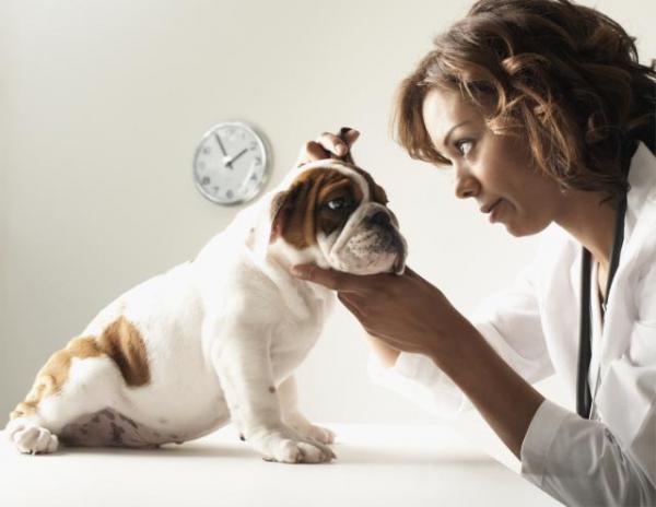 лечение отита у собаки
