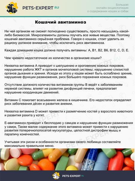 Кошачий авитаминоз