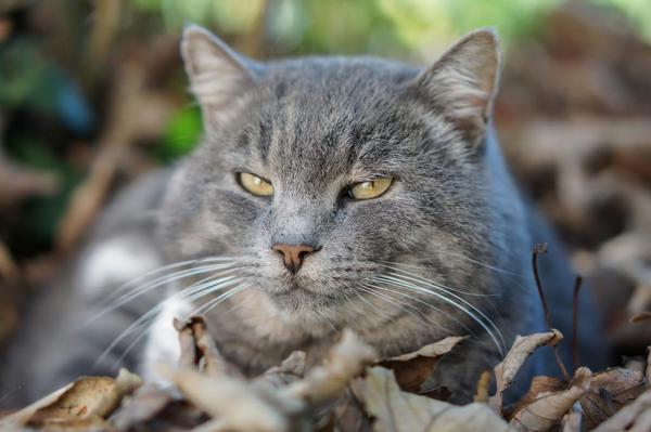 Ожирение у кошки анализы
