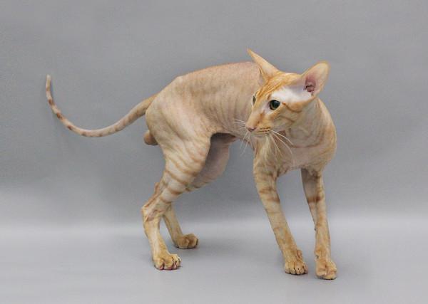 Сохранить кота в такой форме не сложно