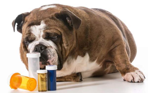 собака болеет почечной недостаточностью