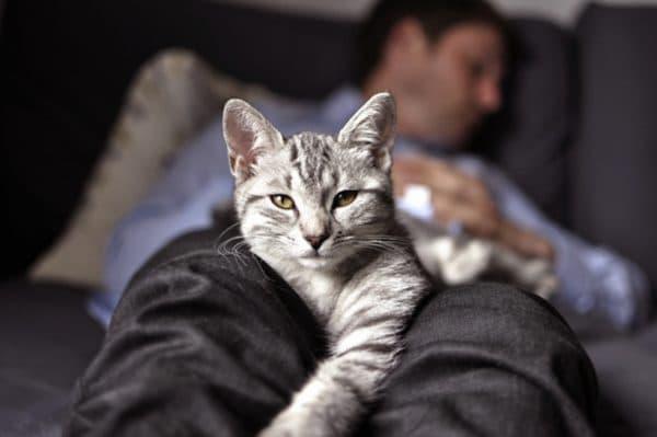 Почему кошки любят спать именно в ногах