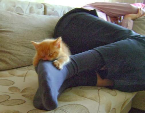 котенок спит на ногах