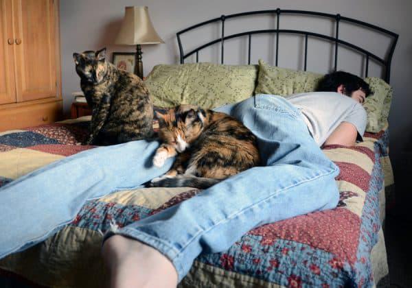 Почему кошки любят спать в ногах читайте статью