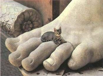 привычка котов спать на ногах