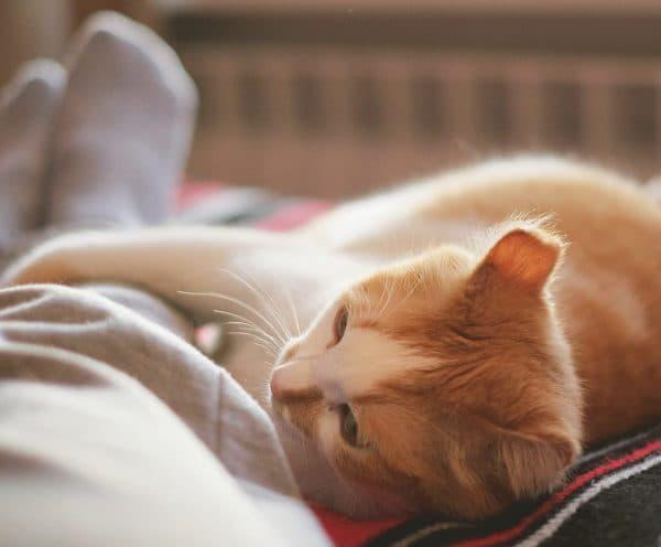 Поведение хозяина во время отучения кошки спать в ногах