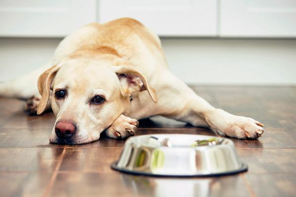 собака плохо ест худеет что делать