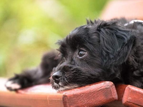 Собака лежит на скамейке