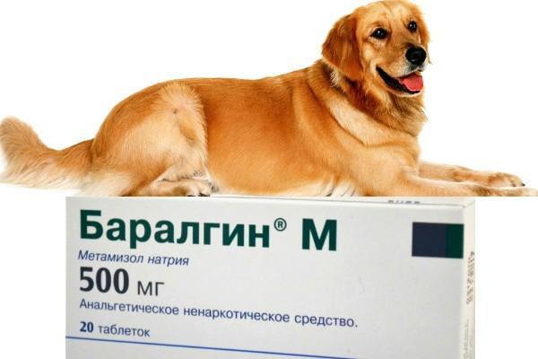 Баралгин – анальгетик, котрый можно применять собакам