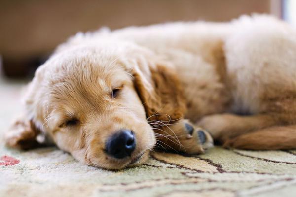 Профилактика желтой рвоты у собак