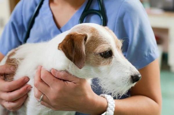 Синдром Кушинга у собак