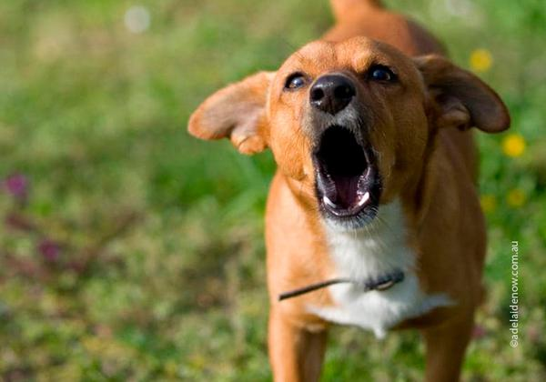 Собака может лаять без причины