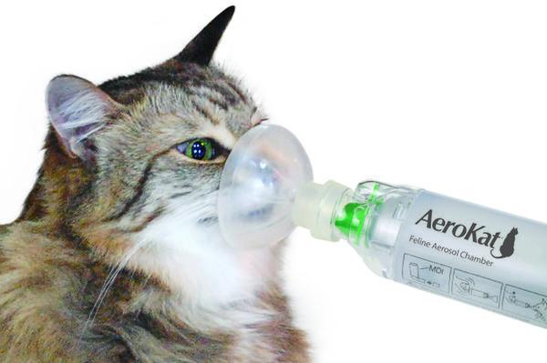 Астма у кошки, лечение (лайфхак) Кот, Астма, Лайфхак, Длиннопост