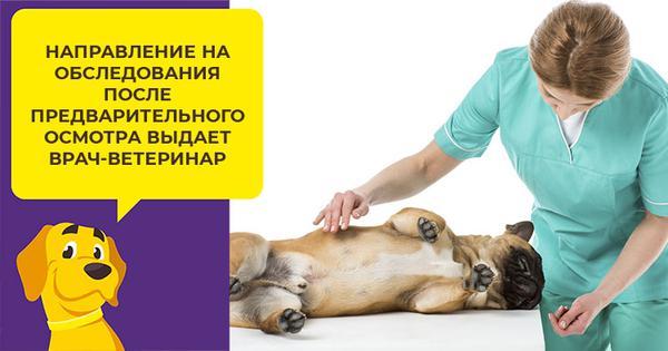 Когда собаке необходима томография и что нужно знать о процедуре