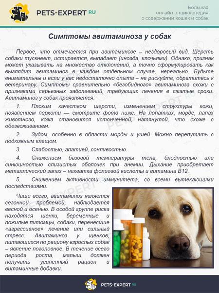 Симптомы авитаминоза у собак