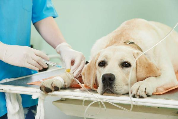 Лечение собак у ветеринара