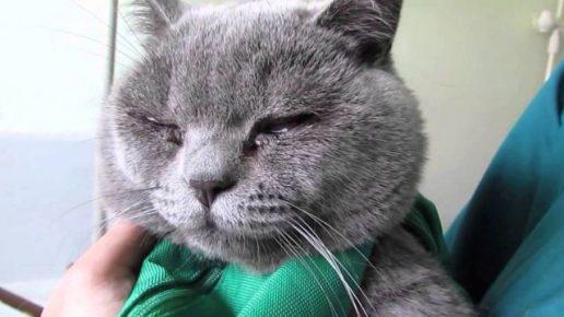Кот с выделениями из глаз