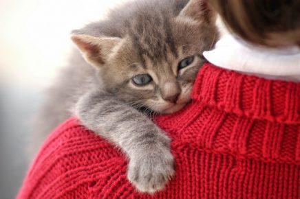 Котик на плече у хозяйки