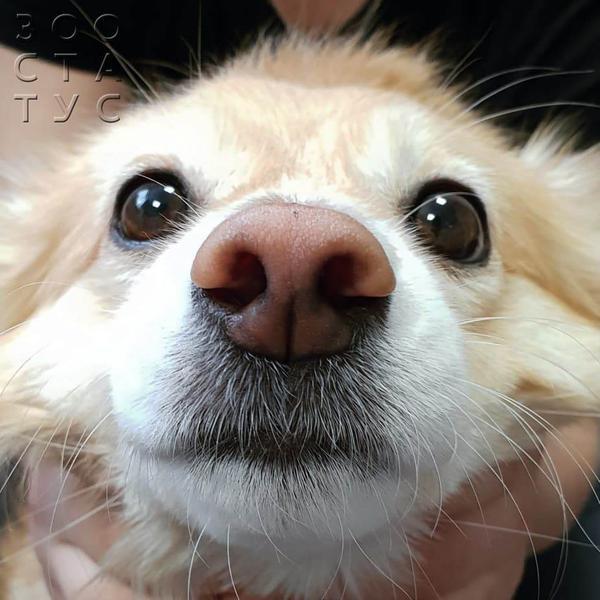 выделения из носа собаки