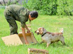 Особенности дрессировки служебных собак