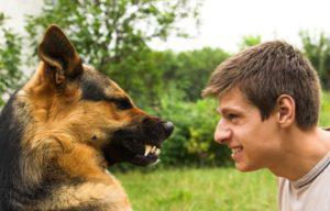 Проявление агрессии у собаки в старости