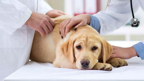 Усыпление собак - эвтаназия