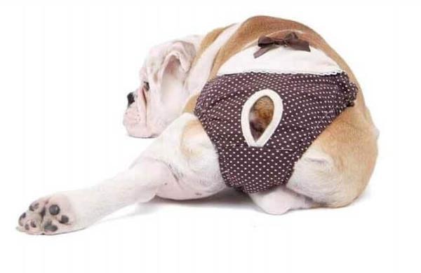 трусы для собак при течке