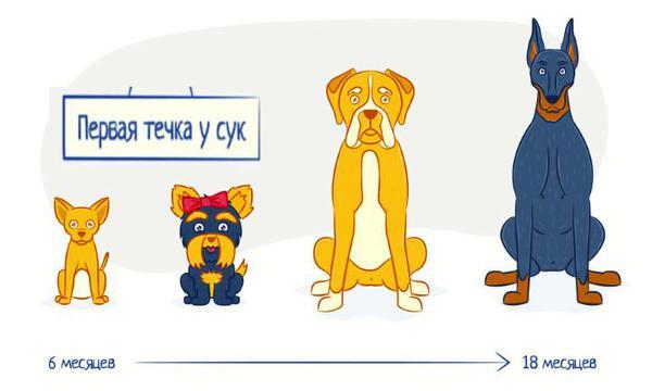 Разные размеры пород собак
