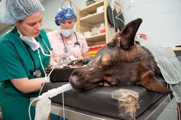 госпитализация собаки